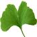 logo_armster